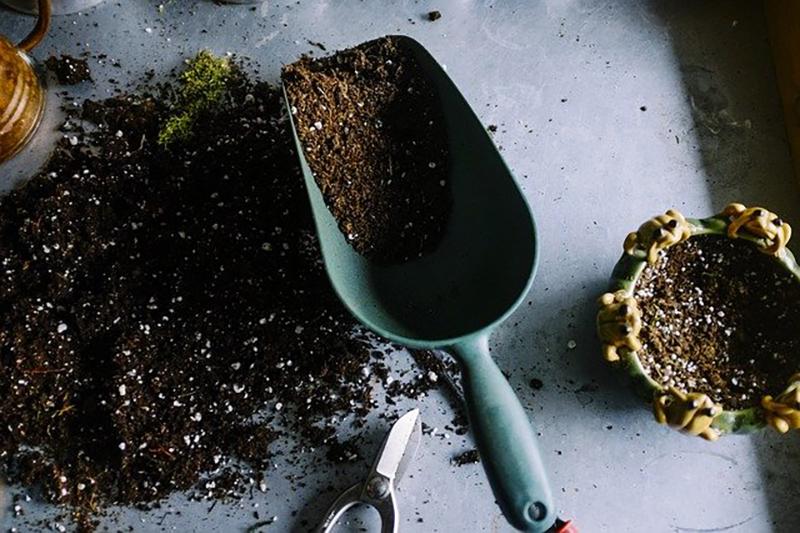 jardinage pour plantes de cannabis